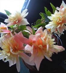 fleurs d'été.jpg